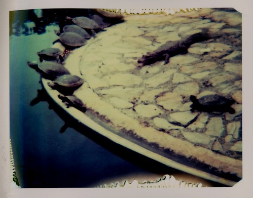 Crocodile among turtles, a Polaroid version, Parque del Este, Caracas, Venezuela, June 2008. | by rahuldlucca