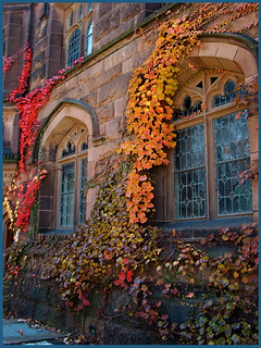 Ivy Windows | by LB2556
