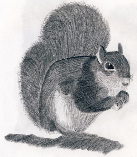 Squirrel drawing | Pencil drawing of a squirrel. I also ...