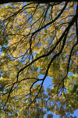 how to get rid of ash tree in garden
