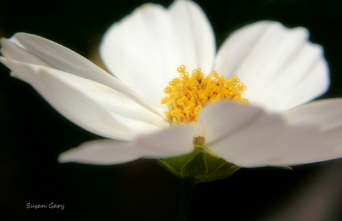 0450 The Light Within | by *GloriousNature*bySusanGaryPhotography