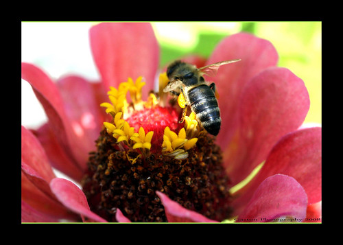 ~~~Busy~as~a~Bee~~~ | by ~~~Gasssman~~~