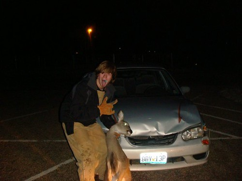 deer vs car messed up my corolla pritty good taken with flickr. Black Bedroom Furniture Sets. Home Design Ideas