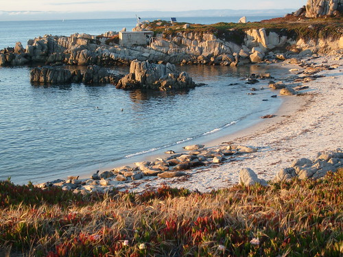 Seal Cove near Hopkins Marine Station, Monterey Bay | by Jill Clardy