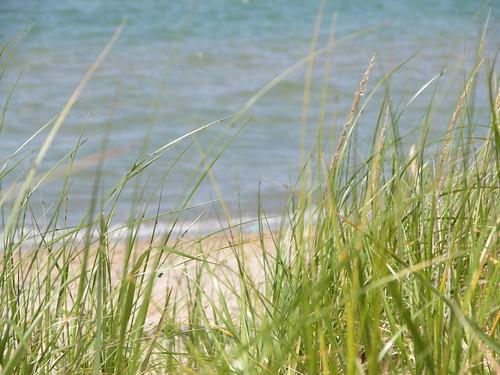 Swingers in grass lake michigan