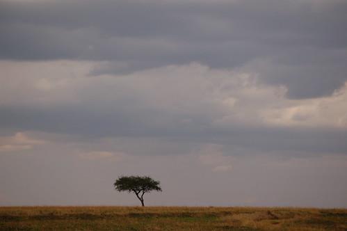 Maasai Mara National Reserve, Kenya | en.wikipedia.org ...