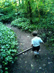 sequoia, the one-year-old trail runner - DSC01009 | by sean dreilinger