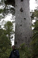Tane Mahuta | by *Esther