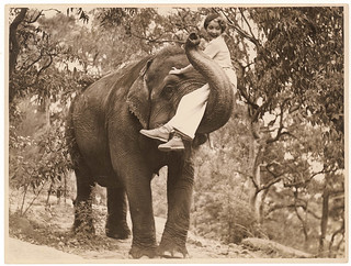 Film star Helen Twelvetrees on an elephant, Taronga Park Zoo, Sydney, 1936-7 / Sam Hood | by State Library of New South Wales collection