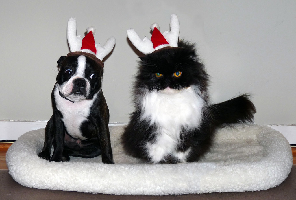 Image result for holidays with pet flickr