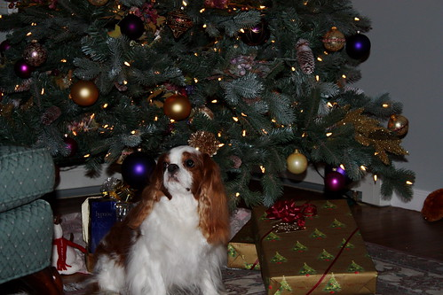 Riley Under Our Christmas Tree | by akgregory26