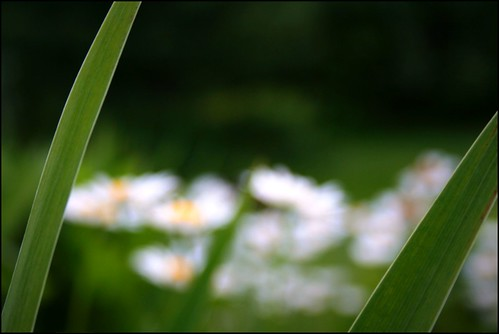 leaves of grass | by auntsmack4u