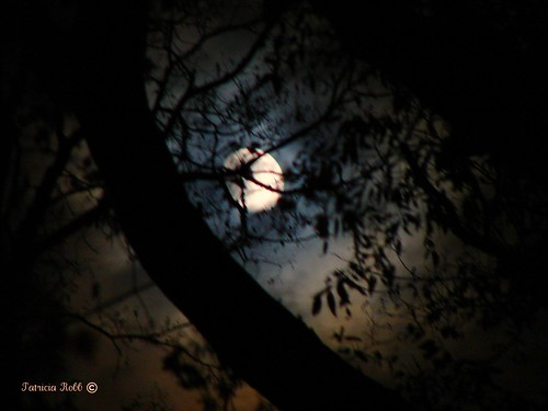 Moonlight In The Forest | by swt snookie