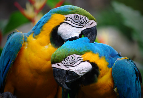Colorful Parrots Couple | by ^riza^