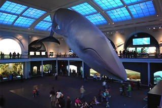 American Museum of Natural History | by amorimur