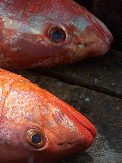 Fish Heads | by The Hungry Cyclist