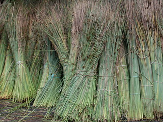 rushes | by Jim Grady