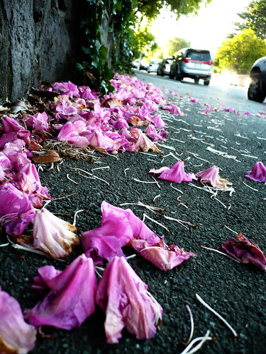 A puddle of flowers on the pavement | by Wermibug