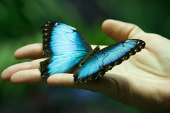 Butterfly in Hand | by Doc List Photography