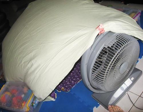 ... fan tent | by Julie K in Taiwan & fan tent | Inspired by Jeku0027s awesomeness scrumdillydo.blogspu2026 | Flickr