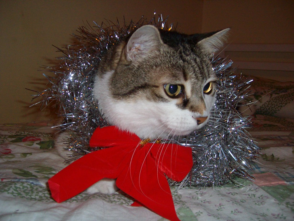 Natale 2008.Natale 2008 Magnus77 Flickr