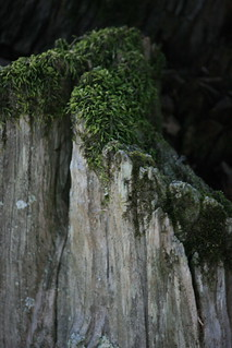 I just love moss and old trees | by The Dolly Mama