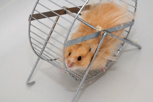 Hamster wheel | by sualk61
