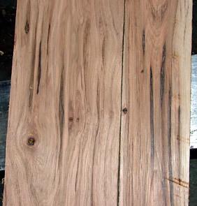 Wormy Calico Hickory Close Up