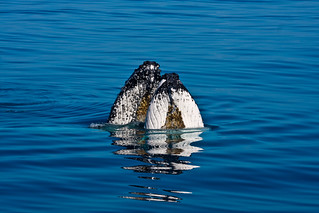 Fraser Island Whales0636 | by Michael Dawes
