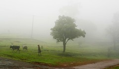 Chikmagalur | by arun.siva