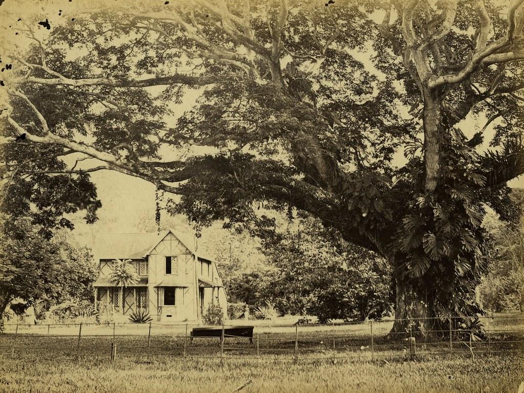 Saman Tree, Botanical Gardens, Port of Spain, Trinidad | Flickr