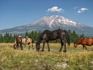 At the foot of Mount Shasta | by indianponygal