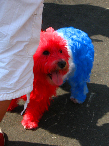 Red, White & Blue Puppy 2 | by Vemrion