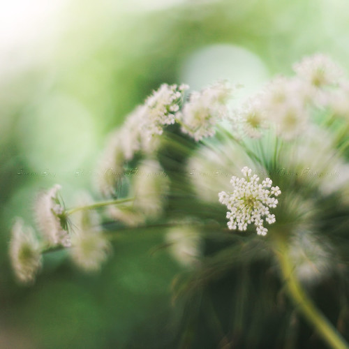 **Queen of the Gorgeous Green Bokeh Wind** | by *GloriousNature*bySusanGaryPhotography