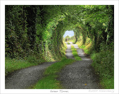 Green Tunnel or 'The Road to Hobbiton' | by HaukeSteinberg.com