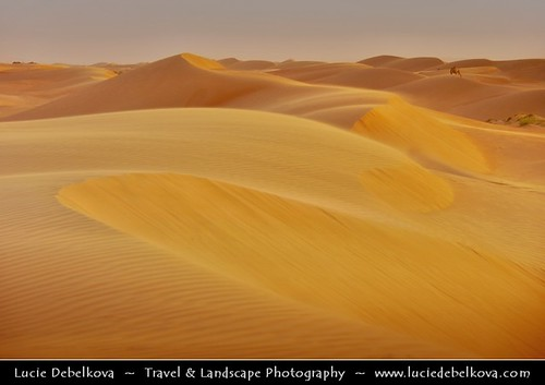 Oman - Wahiba Sands - Lonely Camel at Warm Sunset Time | by © Lucie Debelkova / www.luciedebelkova.com
