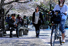 Ambivalence, Wonderment, Joy: the panoply of human expression; Hanami, Omori, Tokyo | by Alfie | Japanorama