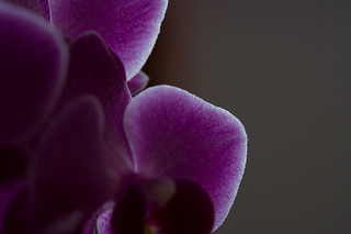 Orchid in the dark | by Martin66