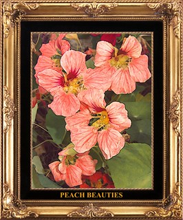 Peach Beauties | by toocoolringlady(tremors are little better)