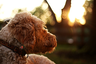 dogs love bokeh | by InWaves