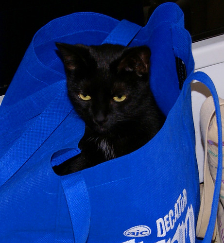 Molly in the Bag | by Mrs Ramsay