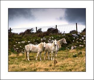 Gower Horses | by Travels with a dog and a Camera :)