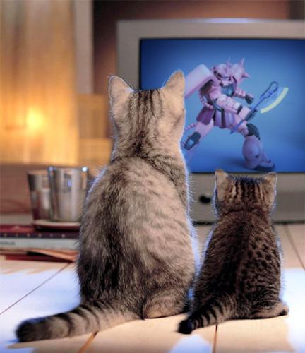 シャアザクを鑑賞する猫