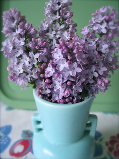 Lilacs | by becktress