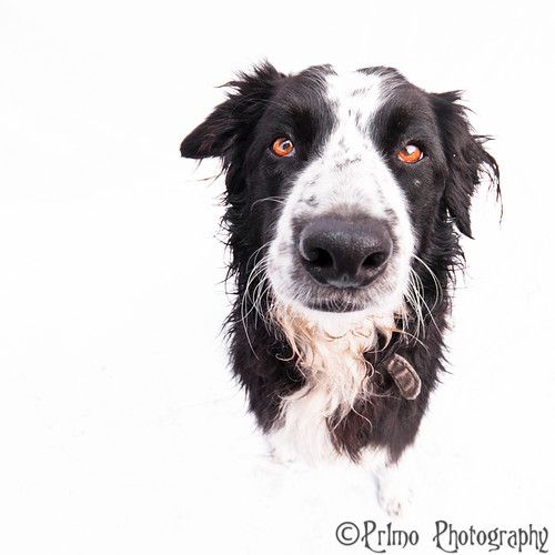 Rocco on white | by Pr1mo Fotografie