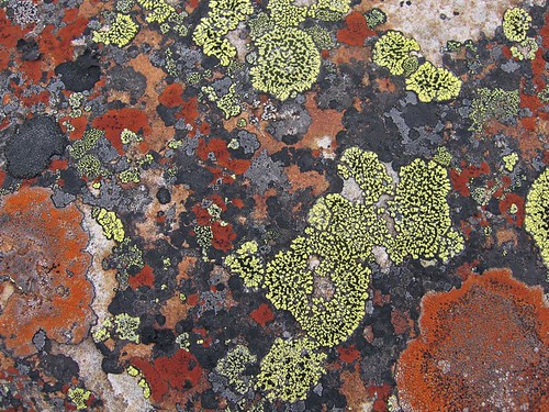 Lichen - Abstract Art | by Paul B Jones