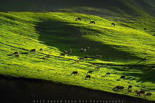 Glowing Meadow.. | by M Atif Saeed