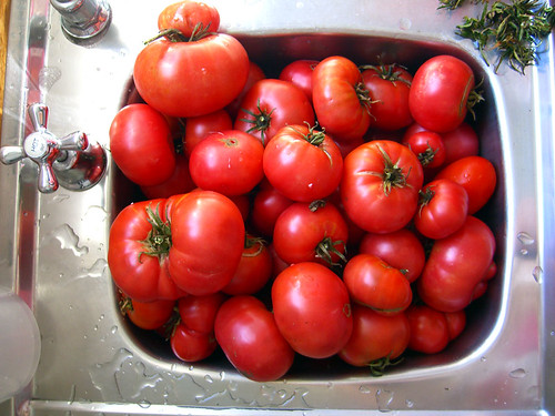 The tomatoes, ready to go | by Spin Spin