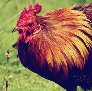 Kauai Chicken | by amber {in the shadow of za'ha'dum}