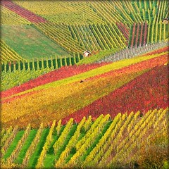 House nestled in Vineyard - Fall Nature, Germany | by Batikart